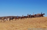 Khotso Horse Trails